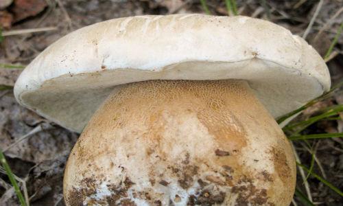 mushroom-foraging-Buena-Vista-Colorado_-9