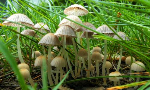 mushroom_forest_by_pkgam-d3jweoj