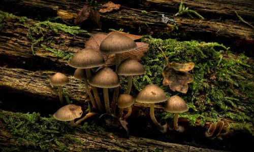 nature-mushrooms-infected-mushroom
