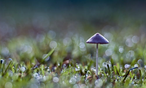 nature_mushrooms_lonely_mushroom_011540__1558083694